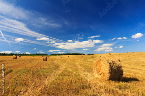 Wall Murals Melon Hay and straw bales in field