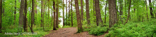 Tuinposter Weg in bos pine forest panorama in summer. Pathway in the park