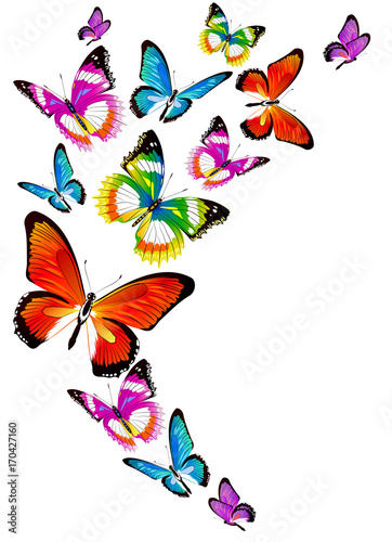 Tuinposter Vlinders beautiful color butterflies,set, isolated on a white