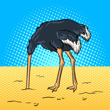 Ostrich Hid Its Head In The Sa...