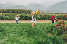 Group Of 3 Funny Kids Playing Together In Flower Fields, Vacation In Countryside With Children. Happy Active Childhood. Family Enjoying Nature In Summer