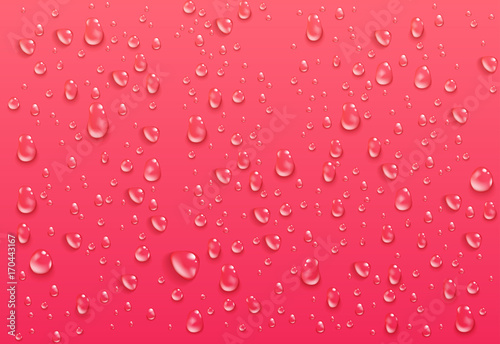 Realistic transparent water drops. Pure condensed droplets on bright pink background. Wet surface and clear liquid formed by condensation. Vector illustration.