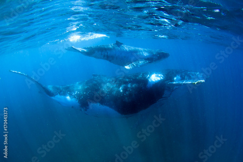Humpback Whales mother and calf underwater