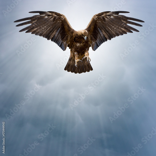 In de dag Eagle eagle in the dark sky
