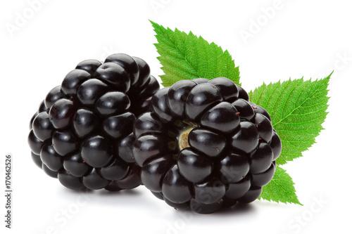 Obraz na plátne Blackberries isolated on the white background.