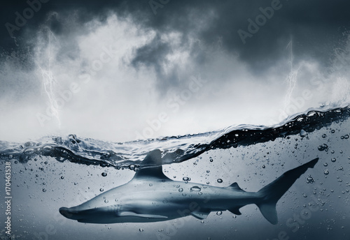 Fotografía  Requin et menace dans la mer