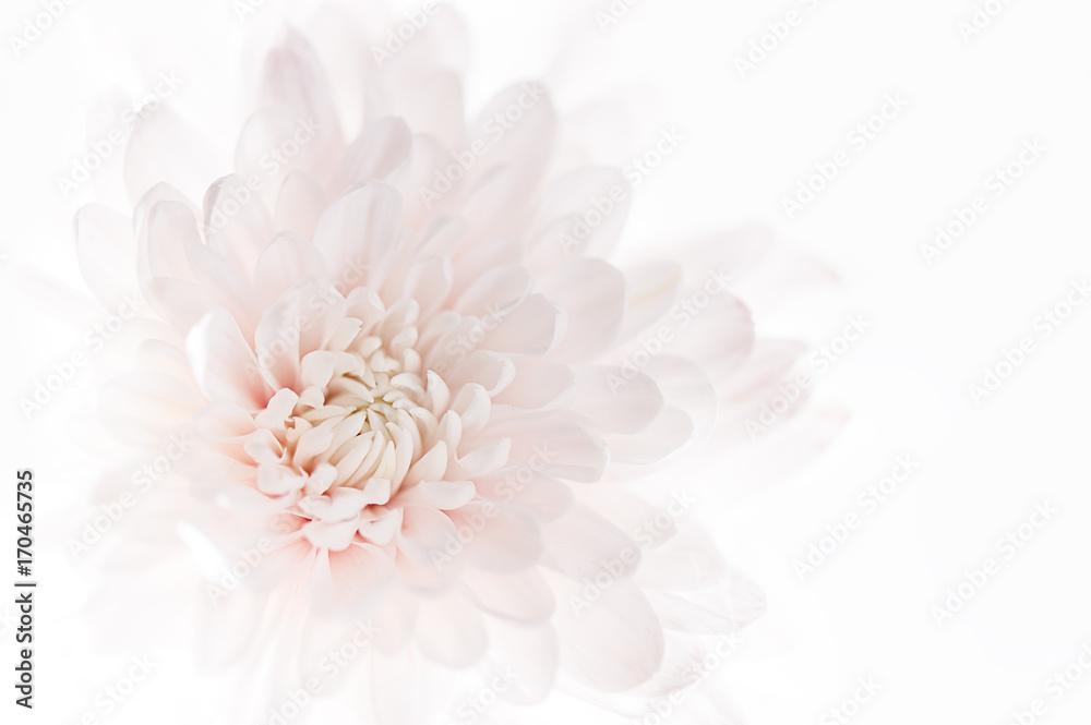 Fototapety, obrazy: fiore rosa