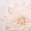 canvas print picture - fiore rosa