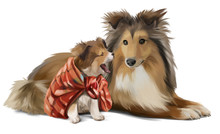 Mother And Son Sheltie Waterco...