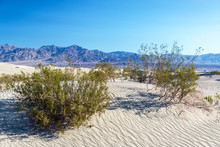 Mesquite Flat Sand Dunes And S...