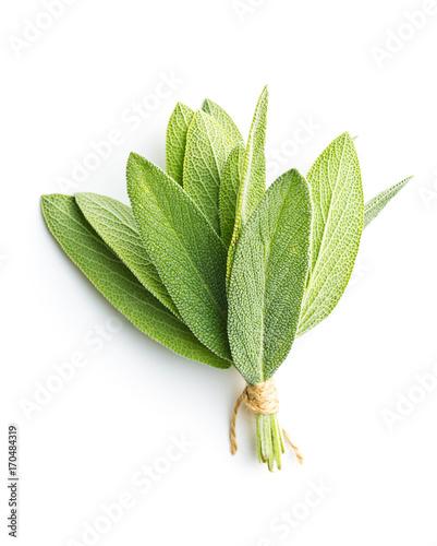 Fototapeta Salvia officinalis. Sage leaves. obraz