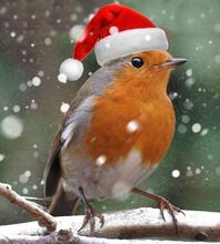Christmas Robin Dressed As San...