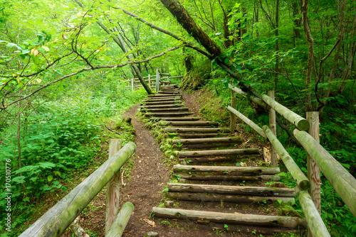 Foto op Canvas Weg in bos 森の中のハイキングトレイル