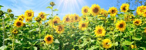 Poster Jaune Grußkarte - Sonnenblumen