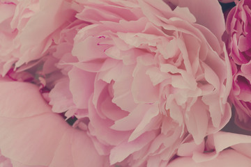 FototapetaPink floral macro background of fresh pink peony flowers, retro toned