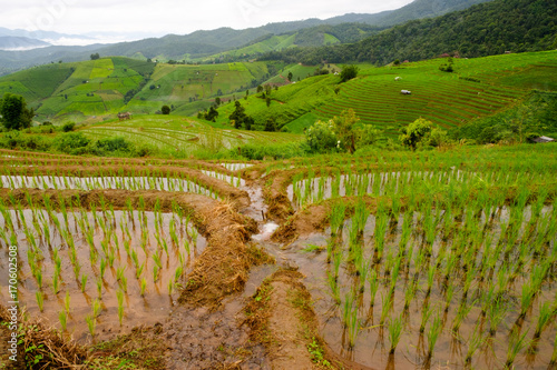 Staande foto Rijstvelden Irrigation for Rice fields on terraced of Mae Cham,Chiang Mai, Thailand. Thailand landscapes.