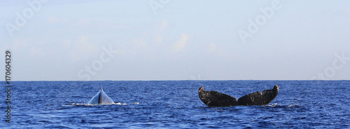 whale in Reunion Island