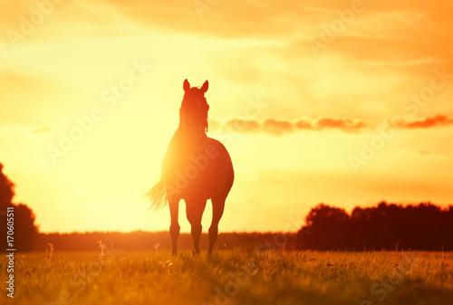 Foto auf AluDibond Pferde Pferd im Sonnenuntergang