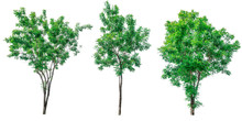 Collection Of Green Trees Isol...