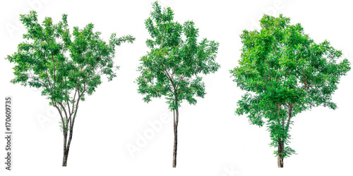 Obraz na plátne Collection of green trees isolated on white background