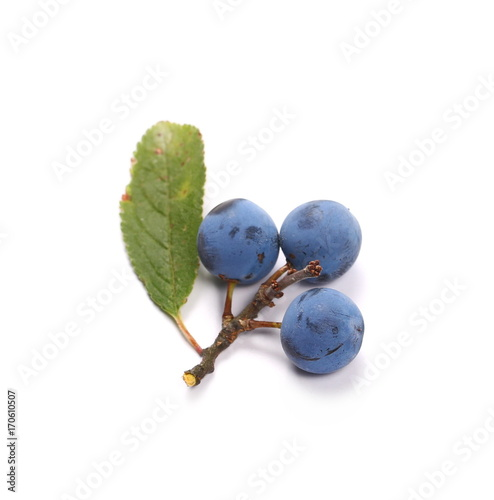 Valokuva  Fresh blackthorn berries with twig, prunus spinosa isolated on white background