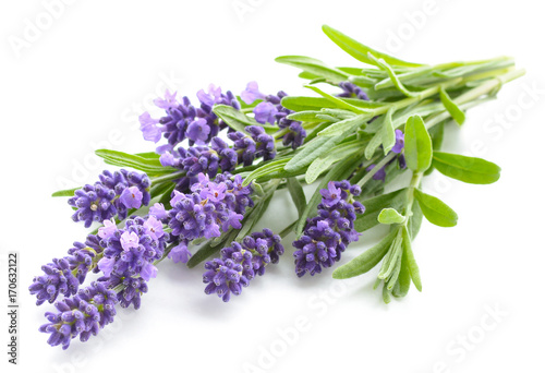 Fotobehang Lavendel Lavender flowers on a white