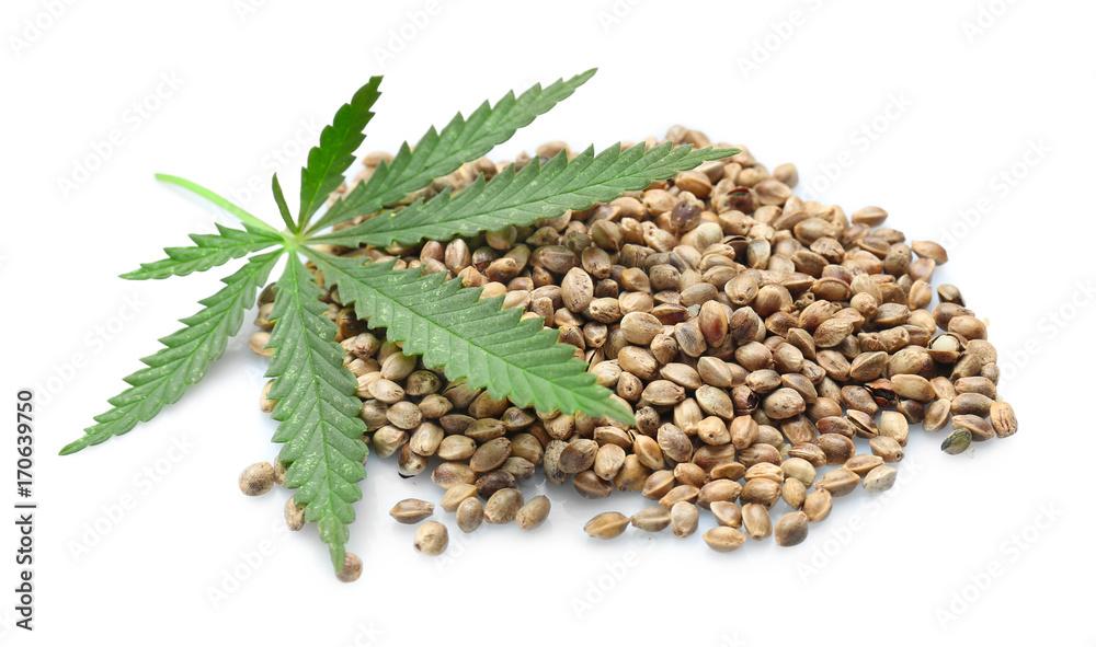 Fototapety, obrazy: Heap of hemp seeds on white background