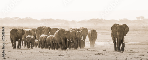 Photo  Herd of lephants at Amboseli National Park, formerly Maasai Amboseli Game Reserve, is in Kajiado District, Rift Valley Province in Kenya