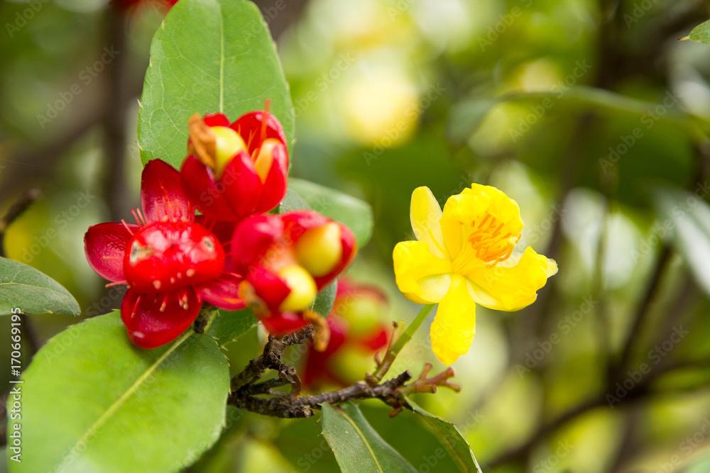 Micky Maus Blume. Foto, Poster, Wandbilder bei EuroPosters