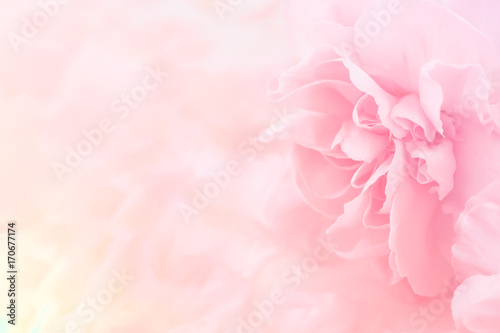 Autocollant pour porte Fleur Pink Carnation Flowers Bouquet. soft filter.
