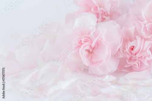 Pink Carnation Flowers Bouquet. soft filter.