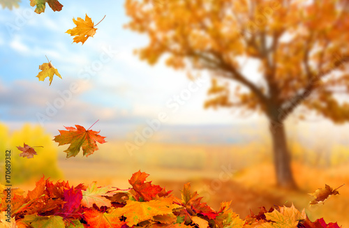 Campagne Beautiful landscape with yellow trees,green grass and sun. Colorful foliage in the park. Falling leaves natural background .