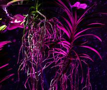 Floral Pattern Luminous Blosso...