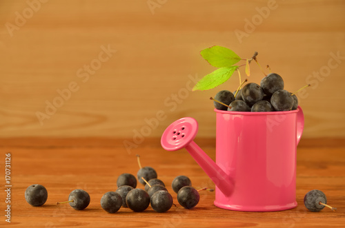 Pink watering can with sloe berries on the wooden surface Canvas-taulu