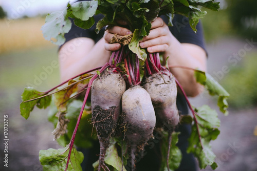 Fotografie, Obraz Farmer hands in gloves holding a bunch of freshly harvested beetroots and a gard