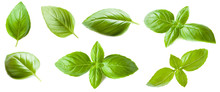 Set Of Basil Leaf Isolated On ...