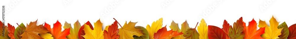 Fototapeta Bunte Herbstblätter - Bordüre Banner