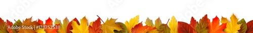 Fototapeta Bunte Herbstblätter - Bordüre Banner obraz