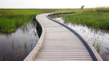 Boardwalk Through Marsh In Sab...