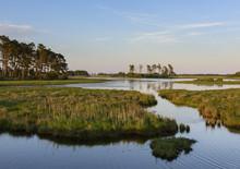 Coastal Wetlands At Sunrise In...