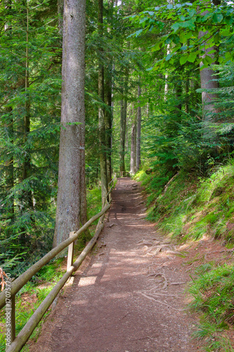 Foto op Canvas Weg in bos Path through the forest.