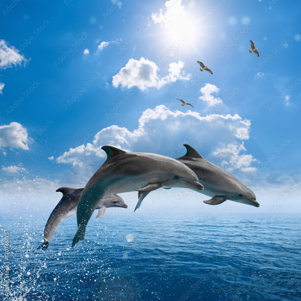 Dolphins jumping out of blue sea, seagulls fly high in blue sky