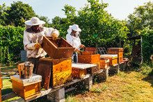 Honey Production And Bees Keep...