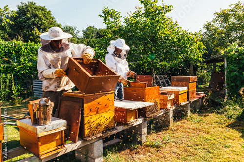 honey production and bees keeping Canvas Print
