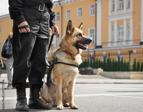 Smart police dog sitting outdoors Фотошпалери