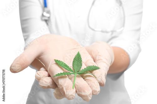 Fotografia  Female doctor with leaf of hemp on white background, closeup
