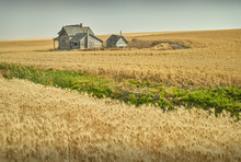 Abandoned Farm Buildings. Aban...