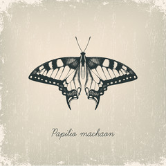 Machaon butterfly. Hand drawn vector illustration.