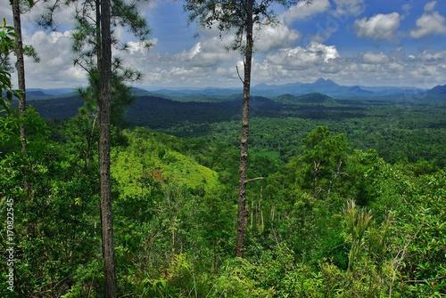 Fotografie, Obraz  Cockscomb Basin Wildlife Preserve (Belize)