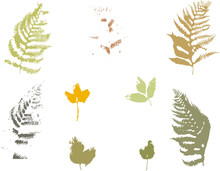 Set Of Fern And Autumn Leaves ...